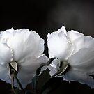Dreaming by Lozzar Flowers & Art