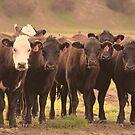 Curious Cows  by Buckwhite