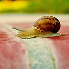 Snail Crossing the Finish Line...slowly... by Buckwhite