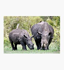 SIDE BY SIDE - MOTHER & BABY - White Rhinoceros - Ceratotherium sumum -WIT RENOSTER Photographic Print
