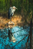Heron My Stump by Randy Turnbow