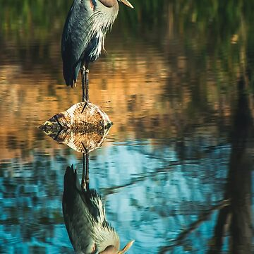 Heron My Stump by BigRedCurlyGuy