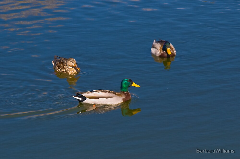 Two is Company Three is a crowd! by BarbaraWilliams