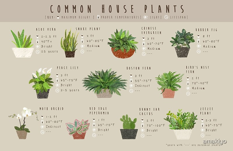 Common house plants infographic posters by amakiyo redbubble - Common indoor plants ...