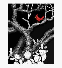 The return of the Cardinal  Photographic Print