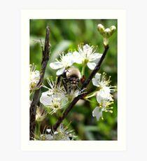 Dont Worry Bee Happy 2 Art Print