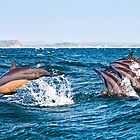Dancing Dolphins by Sue McLeod