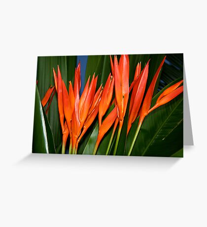 Heliconia Greeting Card