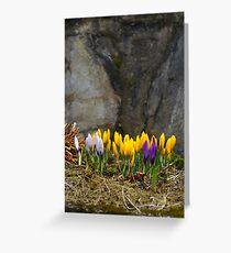 Spring in the Sunken Garden Greeting Card