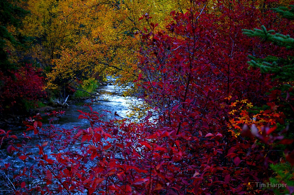 Colors of fall by Tim Harper