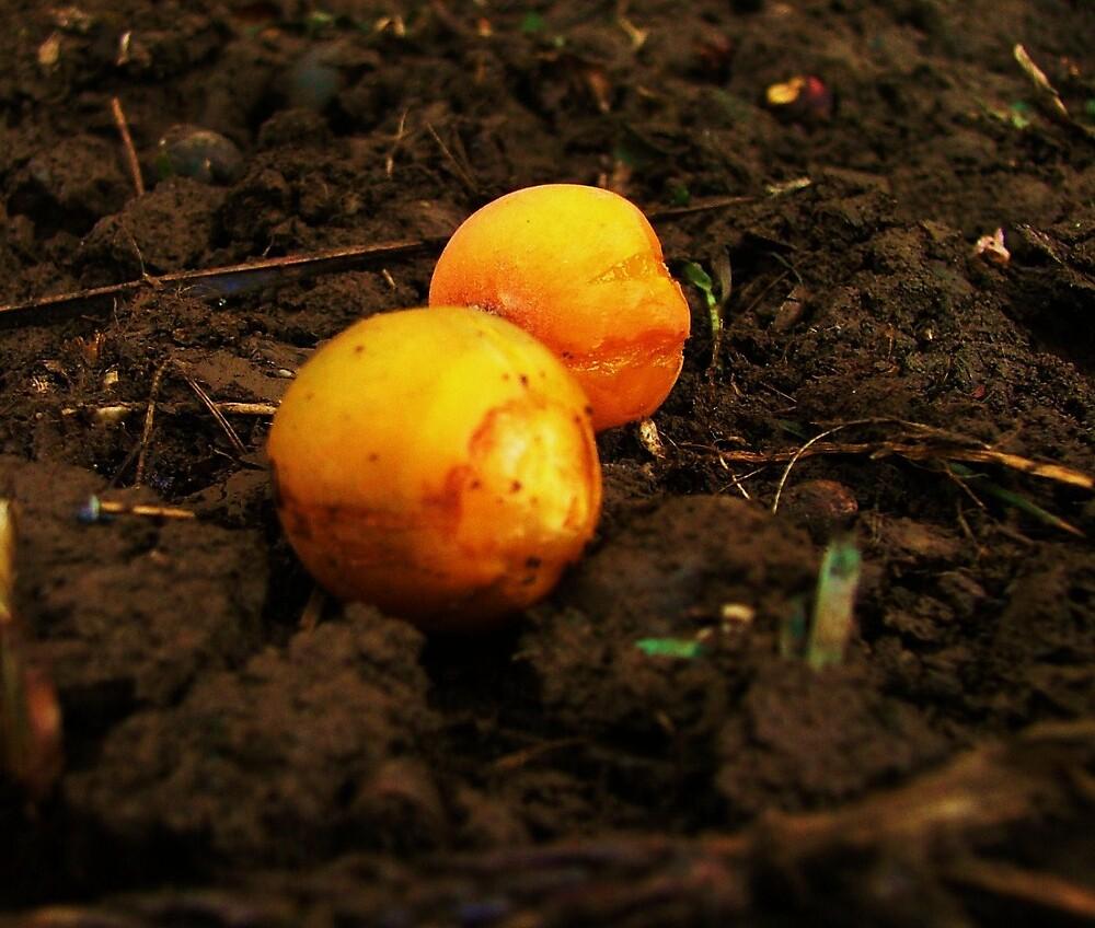 Betel Nuts by Diana Forgione