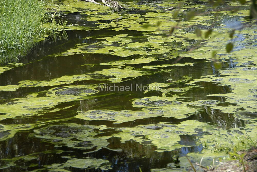 Pond Art I by Michael Norris