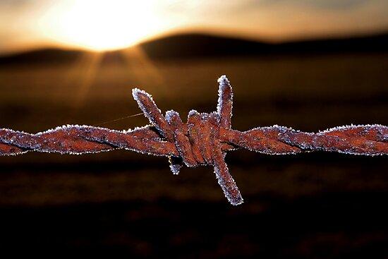 Wire'n'ice by Penny Kittel