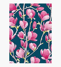 Magnolia Spring Bloom I Photographic Print