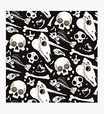 black Skulls and Bones - Wunderkammer Photographic Print
