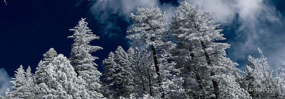 Winter Yosemite by farmdogger