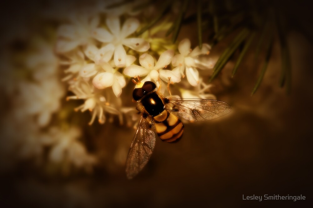 Hoverfly on Blossom by Lesley Smitheringale