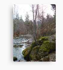 Bear Creek I Canvas Print