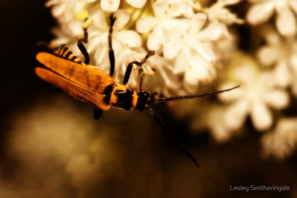 Soldier Beetle on Blossom by Lesley Smitheringale