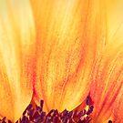 Sunflower II by Silvia Ganora