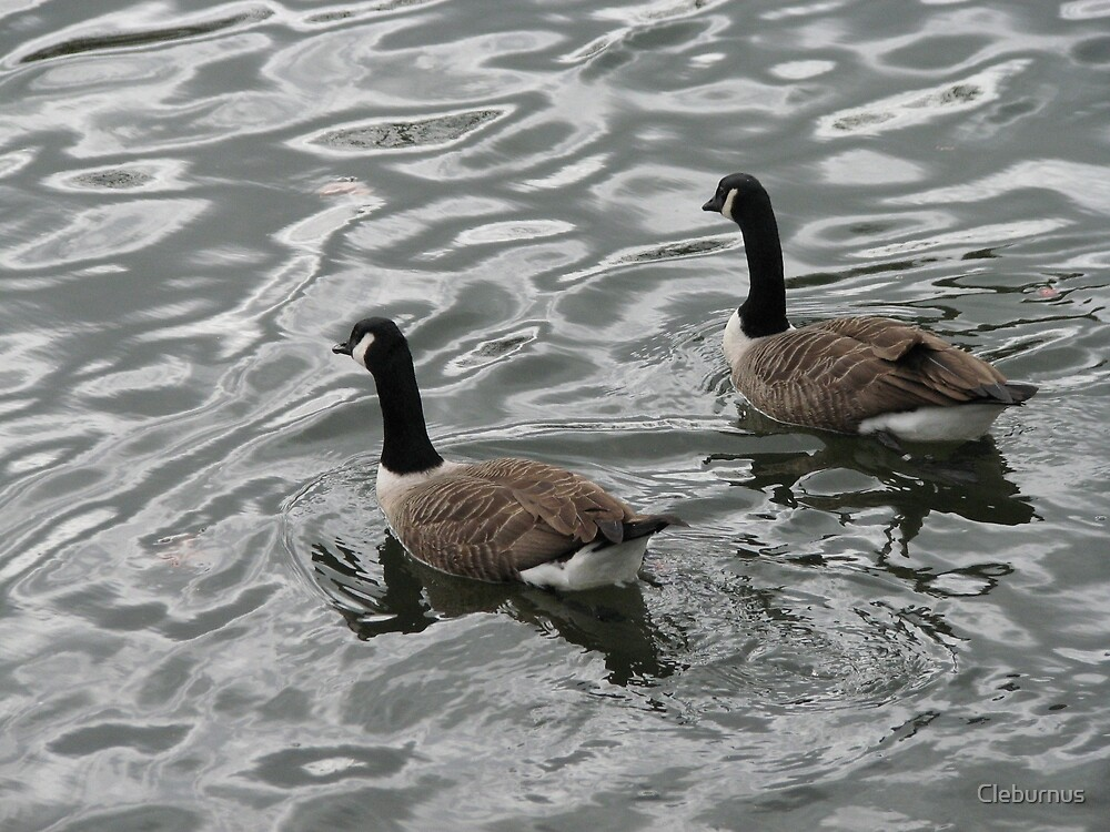 Geese on Thames at Kew by Cleburnus