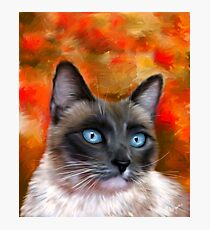Fire and Ice Siamese Cat Painting Photographic Print