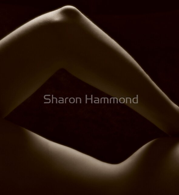 Curves by Sharon Hammond