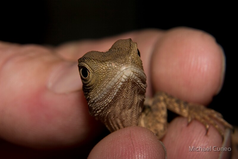 Baby Water Dragon 2 by Michael Cuneo