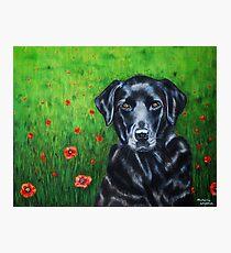 'Poppy' - Labrador Retriever Photographic Print