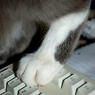 Pussyfoot on the Keyboard by ApeArt