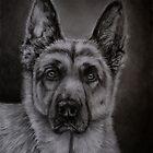 Noble - German Shepherd Dog by Michelle Wrighton