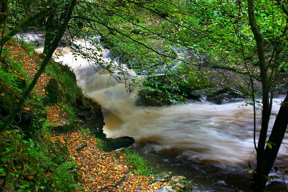 Stream in the Glen by Gerard  Horan