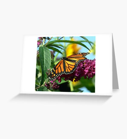 Fall Monarch Butterfly Greeting Card