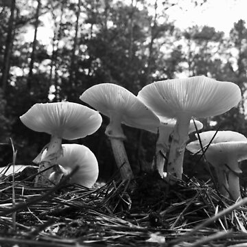 Black and White Mushroom 7 by Wizzie