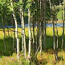 Slender Summer Birches by © Kira Bodensted
