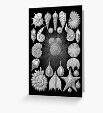 Black and White Seashell Design Greeting Card