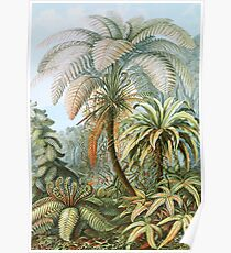 Vintage Fern and Palm Tree Art Poster