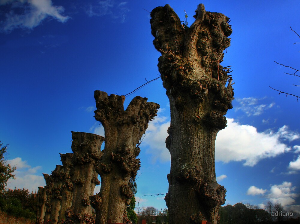 Branchless by adriano
