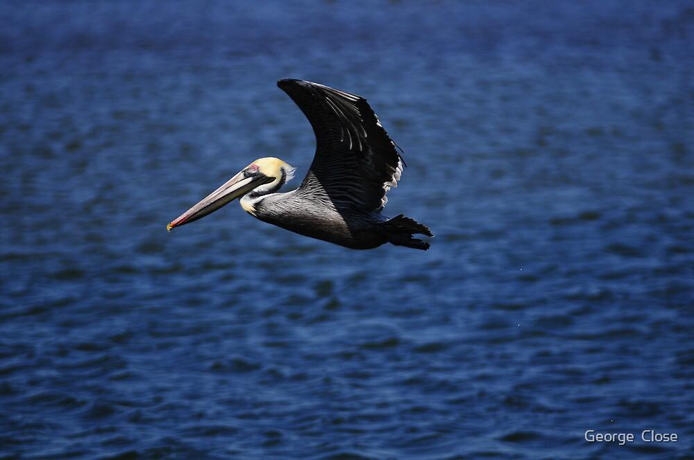cruzin pelican by George  Close