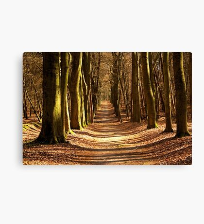 Forest Path in Spring Light Canvas Print