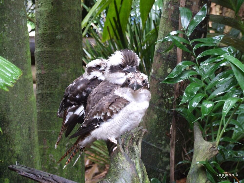 Kookaburra by aggieeck