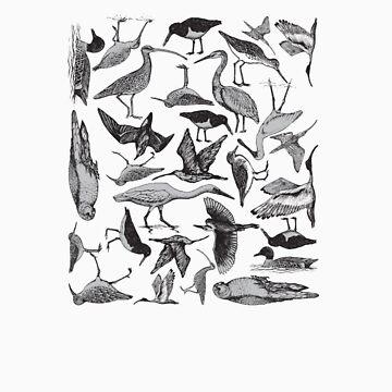 Birds by patsymbush