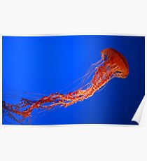 Red Jelly Fish Poster