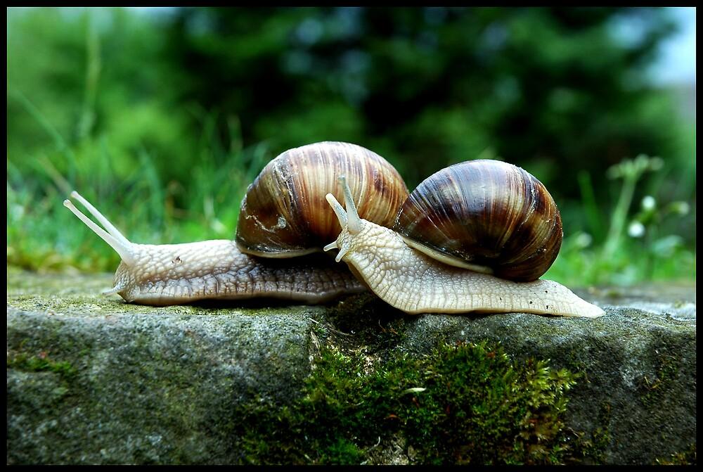 Snailicious Trailicious by Wubalicious
