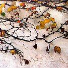 Last Leaves by Christina Backus