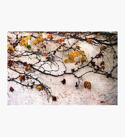 Last Leaves Photographic Print