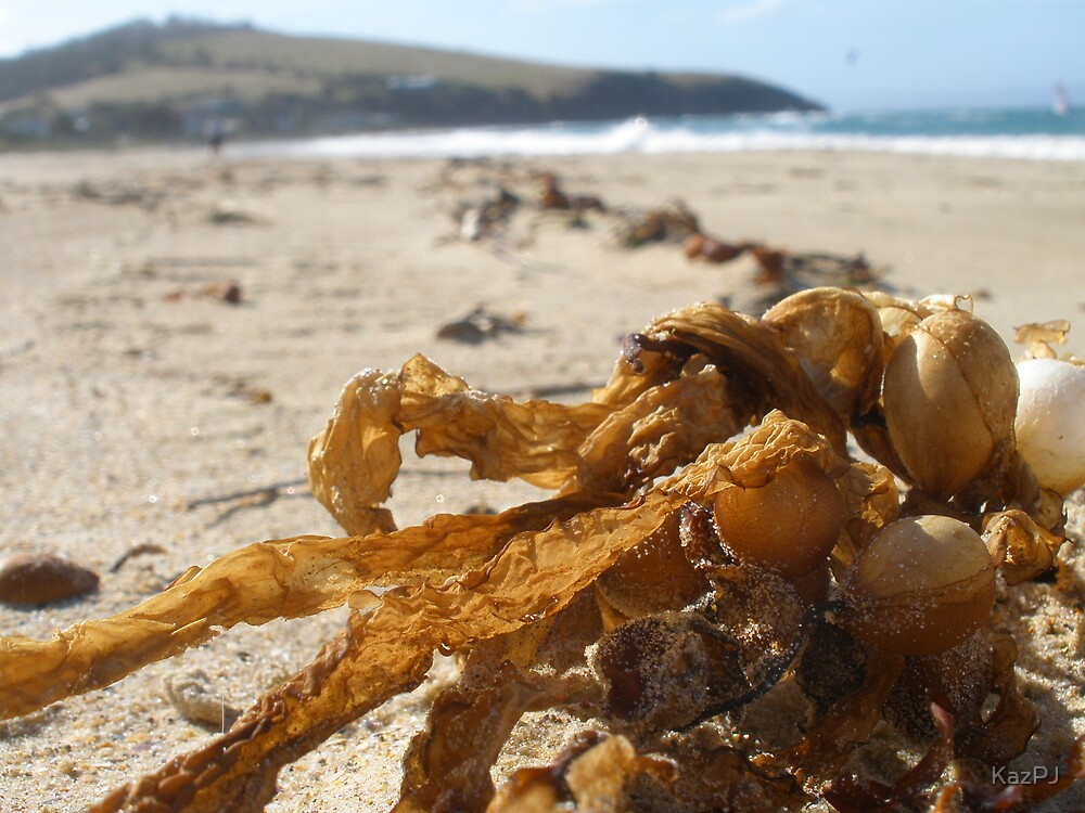 Seaweed by KazPJ