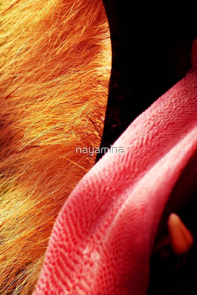 Lions Tongue by nayamina