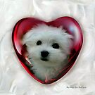 Hermes the Maltese - Little Sweet Heart ! by Morag Bates