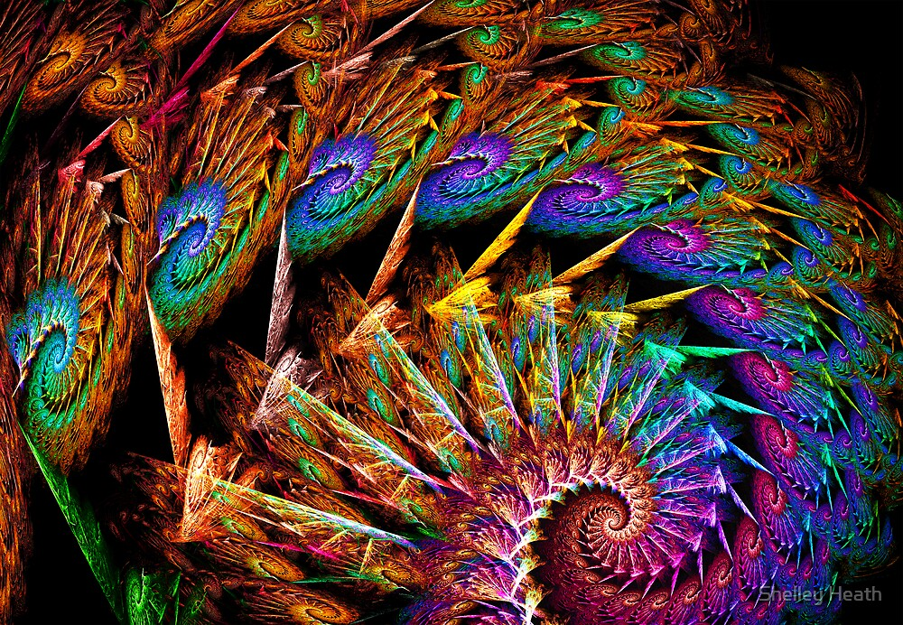 Peacock Feathers by Shelley Heath